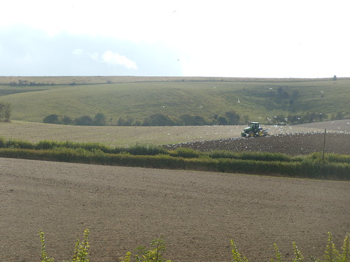 Tractor with gulls