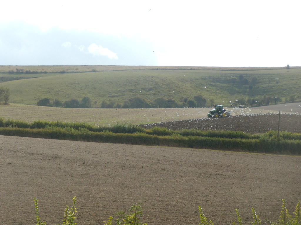Tractor with gulls Sandling to Wye