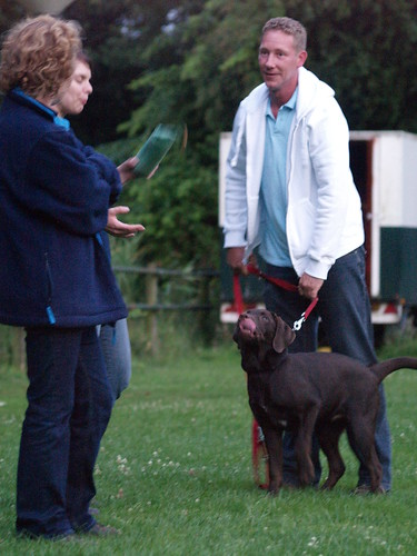 Ways You To Can Be More Effective With Your Training Your Dog 2