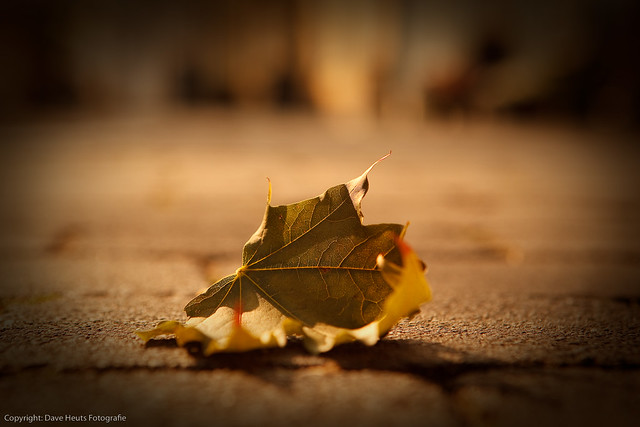 Lonely leaf left alone from Flickr via Wylio