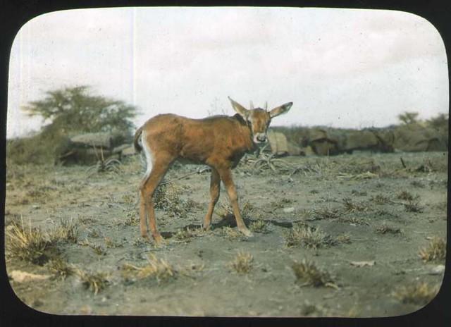 Header of young mammal