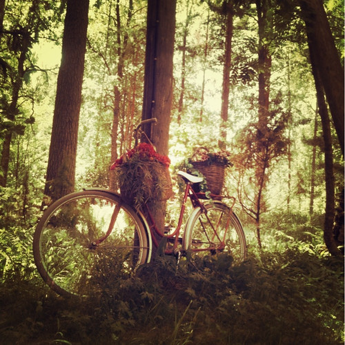 flowers green bicycle forest woods squareformat iphoneography iphone3gs