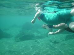 polar bear(0.0), snorkeling(1.0), swimming(1.0), sports(1.0), underwater(1.0),