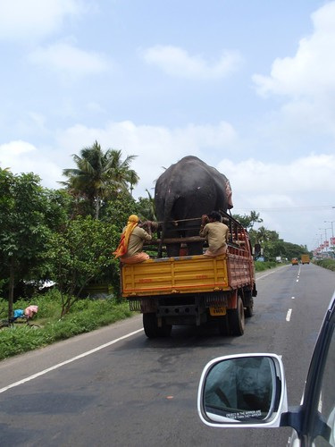 Elephant riding down the road to Kerala in a truck by newyorkprof