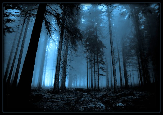 The Enchanted Forest by frozenmistress on DeviantArt