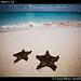 Starfish, Isla Mujeres (3)