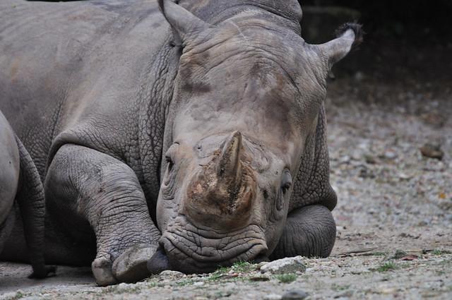 Taiping Zoo 31