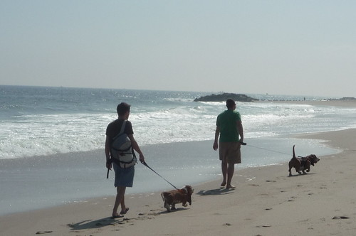 Long Branch beach in Fall with Basset Hounds