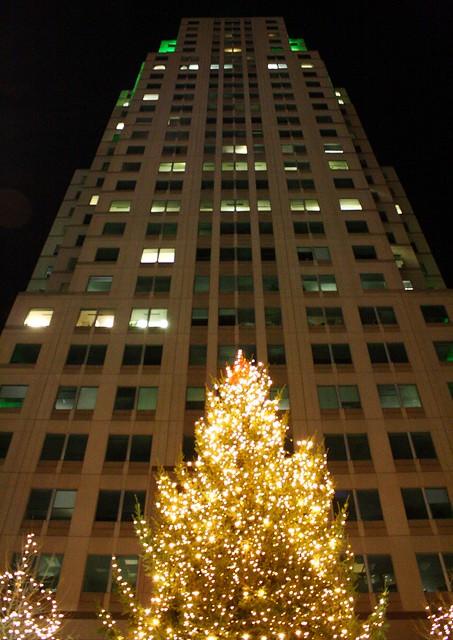 Christmas Tree Farm Raleigh Nc
