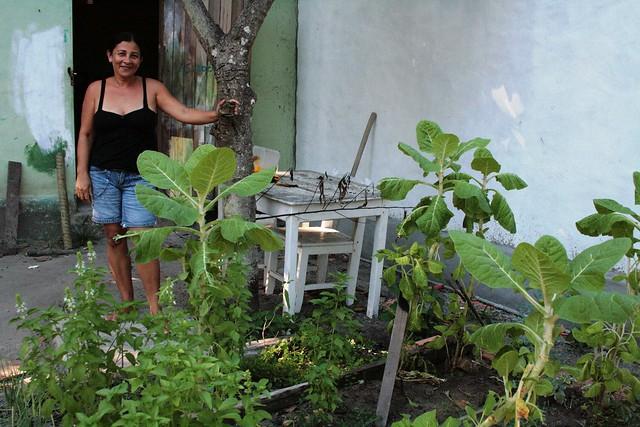 Horta em casa Flickr - Photo Sharing!