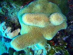 animal(0.0), coral reef fish(0.0), fauna(0.0), pomacentridae(0.0), coral reef(1.0), coral(1.0), organism(1.0), marine biology(1.0), stony coral(1.0), cnidaria(1.0), underwater(1.0), reef(1.0), sea anemone(1.0),