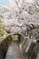 Path of Philosophy (Tetsugaku-no-Michi)
