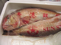 fish, fish, seafood, red snapper, oily fish, food,