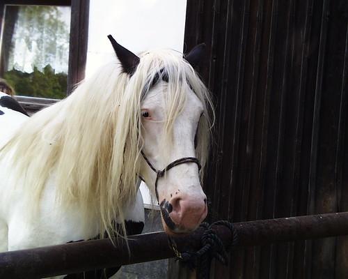 Das Pferd auf Reisen nach Hauyhnhnm oder Erzgebirge 010