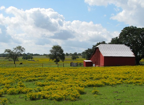 flowers yellow barn farm redbarn brenham washingtoncounty mlhradio