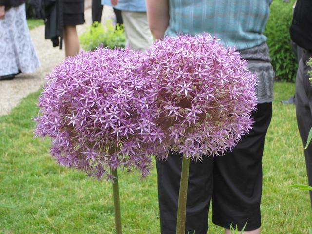 Flower Butt 65