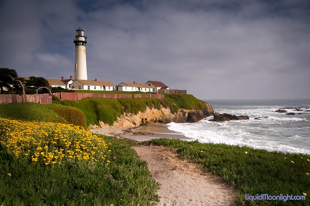 Path to the Beach - Pigeon Point Lighthouse