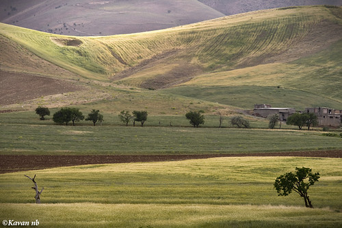 light summer tree field yellow canon landscape iran wheat iranian kurdistan sanandaj kavan kordestan 400d 70200lf4is