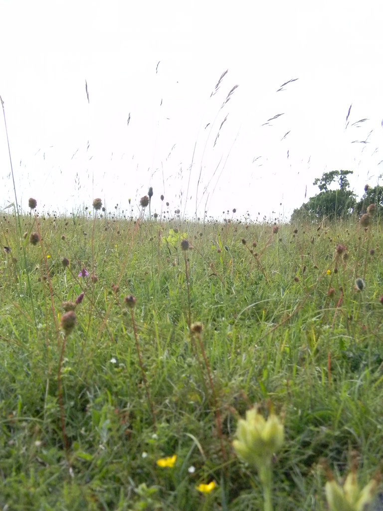 Grass 'fireworks' Petersfield to Rowlands Castle