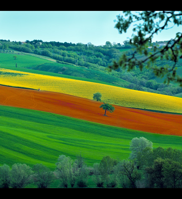 Landscape: Lines of Colors, green, orange and yellow.