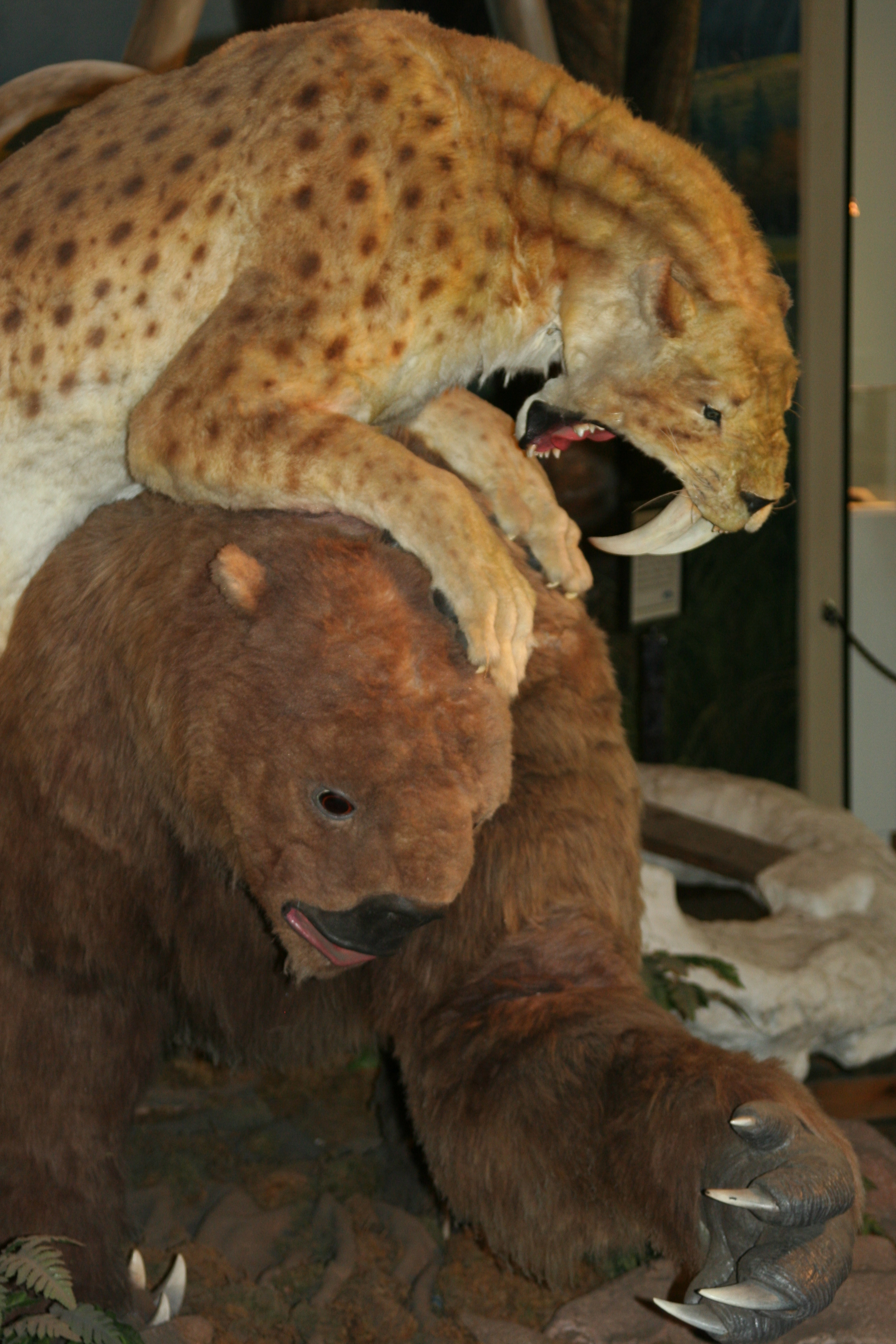 Saber Tooth Tiger attacks Ground Sloth at Page Museum ...