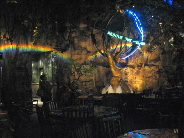 Rainforest Cafe Disney Springs Reservierung