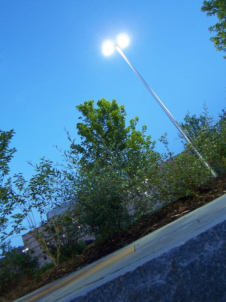 trees @ bailey plaza