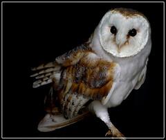CELeBRITY BIRDS