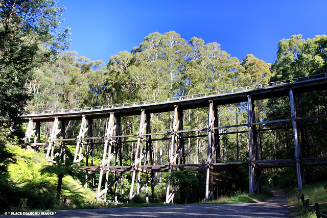 Trestle Bridge at Noojee - Gippsland, Victoria, Australia