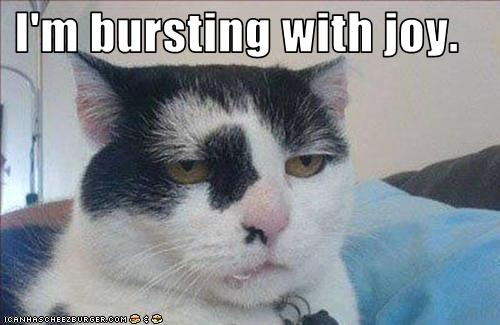 funny-pictures-your-cat-is-bursting-with-joy1