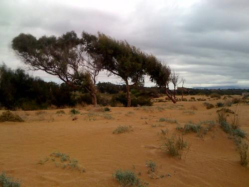 Nelle dune della foce del Belice