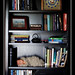 newborn...in a bookshelf