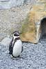 Whipsnade - Penguin