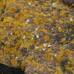 Lichen, Lake Sevan, Armenia