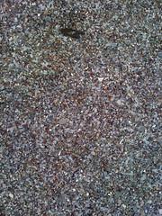 asphalt(0.0), soil(0.0), sand(0.0), flooring(0.0), rubble(1.0), granite(1.0), pebble(1.0), road surface(1.0), rock(1.0), gravel(1.0),