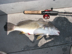 Freshwater Drum - Photo (c) Per Verdonk, some rights reserved (CC BY-NC)