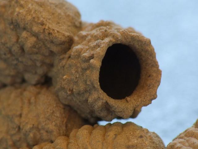 Nid de gu pe solitaire apr s avoir construit son nid la fe flickr photo sharing - Enlever nid de guepe ...