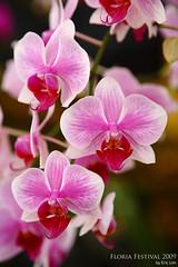 blossom(0.0), cattleya labiata(0.0), cattleya trianae(0.0), flower(1.0), plant(1.0), macro photography(1.0), phalaenopsis equestris(1.0), flora(1.0), moth orchid(1.0), pink(1.0), petal(1.0),