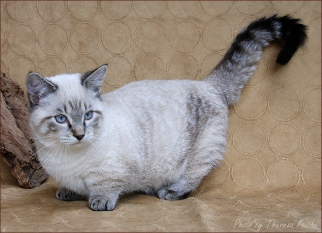 Legged Cats Pictures
