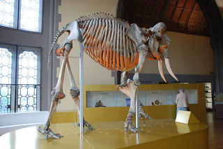 A quirky visit to Hunterian Museum - Things to do in London