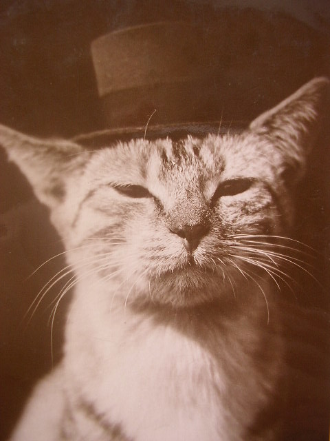 Vintage cat in Top Hat.