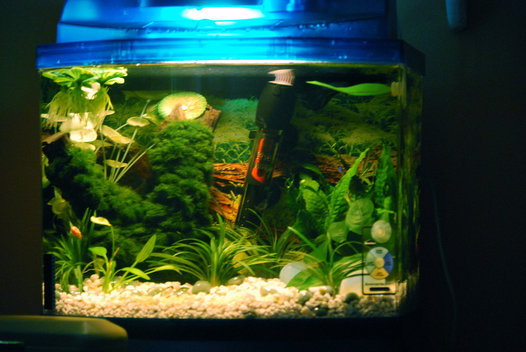 Fish tank decorations 10 gallon diy betta fish tank for How to raise ph in fish tank