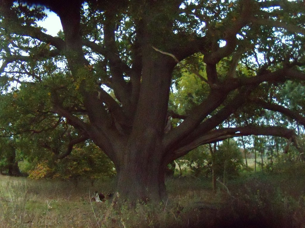 Large Oak Watton-at-Stone Circular