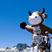 Two Cows and the Croix de Fer