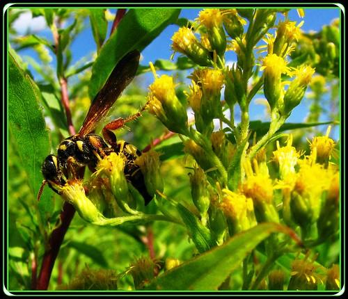 ontario canada bee nectar londonontario