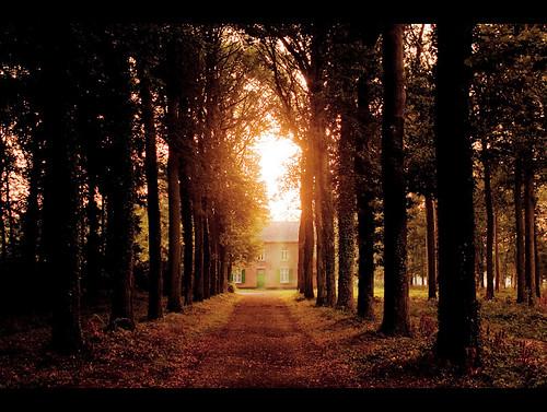 trees sunshine forest sunrise canon glow belgium earlymorning lightroom averbode rebelxs 1000d
