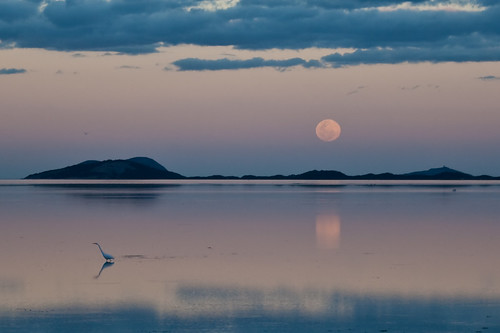 sunset moon reflection bird heron water clouds fullmoon hills albany westernaustralia platinumheartaward briarah1969