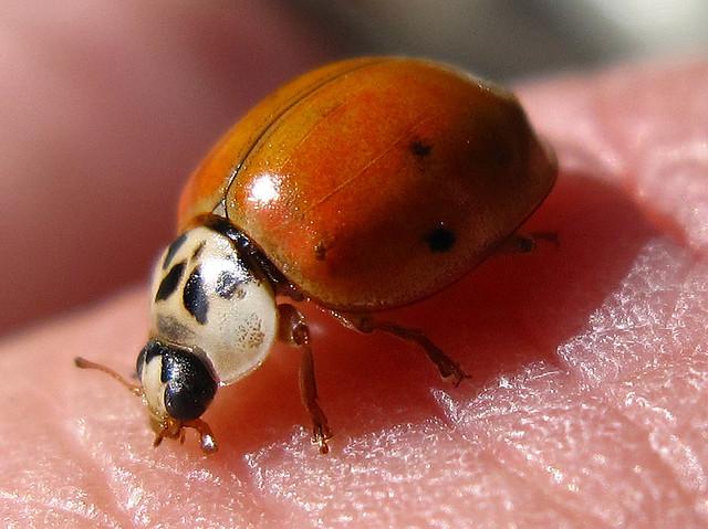Lady Bug Flickr Photo Sharing
