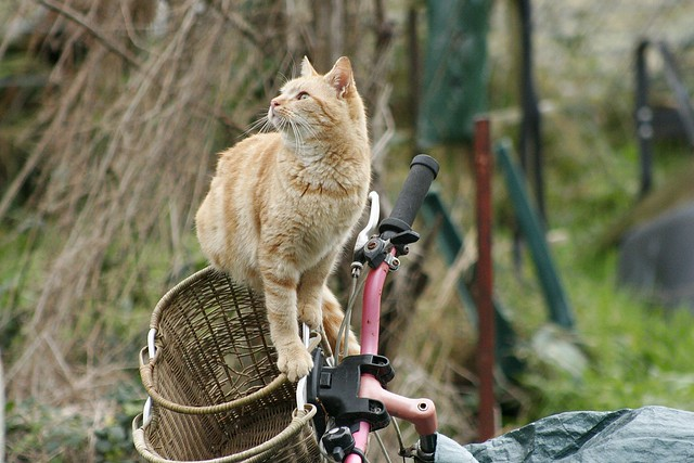 Cat and bike basket