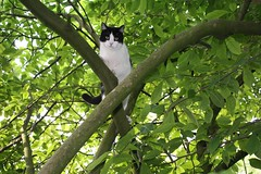 Our cat, Arthur, stuck in a tree